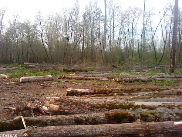 ماسال نیوز تخریب پارک جنگلی کفود شاندرمن