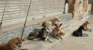 سگ های ولگرد